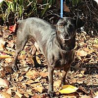Adopt A Pet :: Scotty - Yuba City, CA