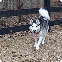 Adopt A Pet :: Apollo - Roswell, GA