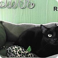 Adopt A Pet :: Rey - Medway, MA