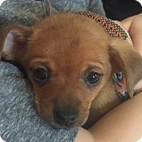 Adopt A Pet :: Rhett - Indianapolis, IN