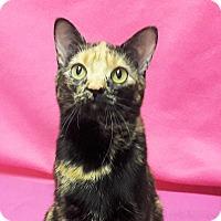 Adopt A Pet :: Katia - Colorado Springs, CO