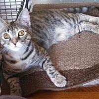 Adopt A Pet :: Spice - West Palm Beach, FL