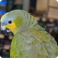 Adopt A Pet :: Paco - Lenexa, KS