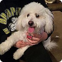 Adopt A Pet :: Whitey - Encinitas, CA