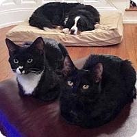 Adopt A Pet :: Coco and Maize - Arlington, VA