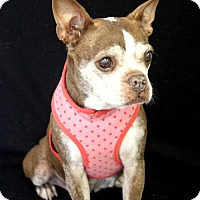 Adopt A Pet :: Abby - Wichita, KS
