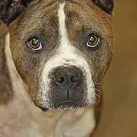 Adopt A Pet :: Tick - Mahwah, NJ