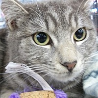 Adopt A Pet :: Squeekers - Castro Valley, CA