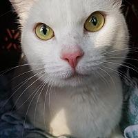 Adopt A Pet :: Macey - Colonial Heights, VA