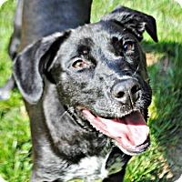 Adopt A Pet :: Colbie - Spring Lake, NJ