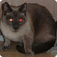 Adopt A Pet :: LOLO - Crescent City, CA