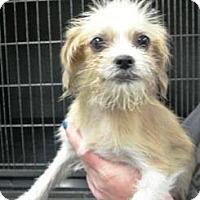 Adopt A Pet :: Luke - Albert Lea, MN