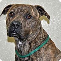 Adopt A Pet :: Dallas - Port Washington, NY
