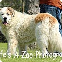 Adopt A Pet :: Smitty - Missouri City, TX