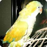 Adopt A Pet :: SUNSHINE - Mantua, OH