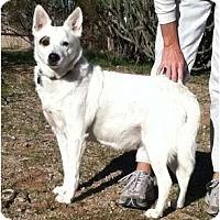 Adopt A Pet :: Easter - Scottsdale, AZ