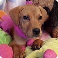 Adopt A Pet :: Baby Misty - Marlton, NJ