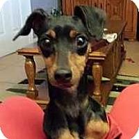 Adopt A Pet :: Maya - McDonough, GA