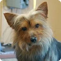 Adopt A Pet :: Rabez - North Benton, OH