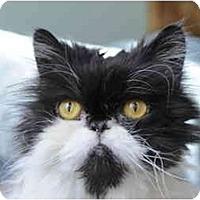 Adopt A Pet :: Taz - Columbus, OH