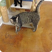 Adopt A Pet :: Miss Kay - Lake Charles, LA