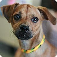 Adopt A Pet :: Drake - Canoga Park, CA