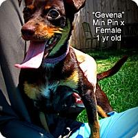 Adopt A Pet :: Geneva - Gadsden, AL