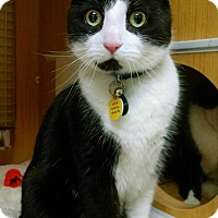 Adopt A Pet :: Cupcake - East Meadow, NY