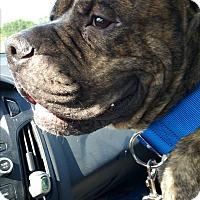 Adopt A Pet :: Luka - Lorida, FL