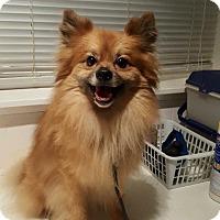 Adopt A Pet :: Tico - Kansas city, MO