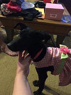 Labrador Retriever Mix Dog for adoption in New York, New York - Petunia Bea
