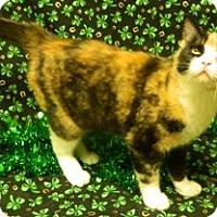 Adopt A Pet :: Penny - Columbus, NE