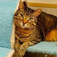 Adopt A Pet :: Zoe - Naperville, IL