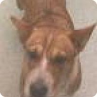 Adopt A Pet :: Harmony 9005 - Columbus, GA