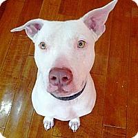 Adopt A Pet :: Odie~Courtesy Post - Phoenix, AZ