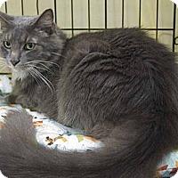 Adopt A Pet :: Sherman - New Port Richey, FL