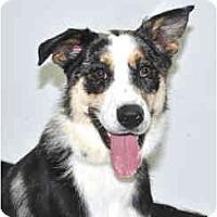 Adopt A Pet :: Sidney - Port Washington, NY
