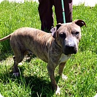 Adopt A Pet :: COOPER - Glastonbury, CT