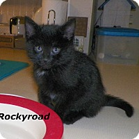 Adopt A Pet :: RockyRoad - Dover, OH