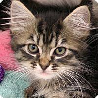 Adopt A Pet :: Brianne - Irvine, CA