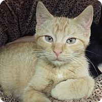 Adopt A Pet :: Taylor Hanson - Richboro, PA