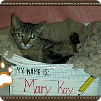 Adopt A Pet :: Mary Kay - Iroquois, IL