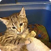 Adopt A Pet :: Molly-adoption pending! - Bridgeton, MO