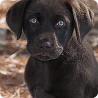 Adopt A Pet :: Burke - Minneola, FL