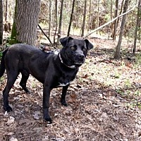 Adopt A Pet :: Alder - York, SC