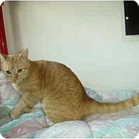 Adopt A Pet :: Sunkiss - Washington Terrace, UT