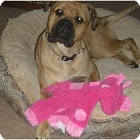 Adopt A Pet :: TT - Roy, WA