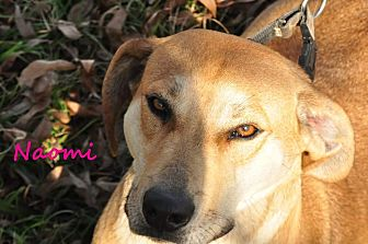 Hound (Unknown Type) Mix Dog for adoption in Davis, Oklahoma - Naomi OKs31