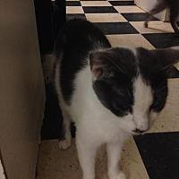 Adopt A Pet :: Chichi - Fresno, CA