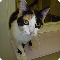 Adopt A Pet :: Cali Sue - Hamburg, NY